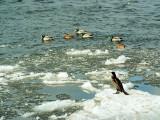 ptaki na lodzie