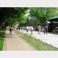 ścieżka rowerowa w Parku Zdrojowym